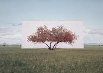 Myoung Ho Lee - arbres - photographe coréen