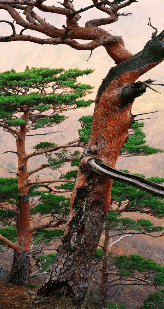 pin rouge coréen