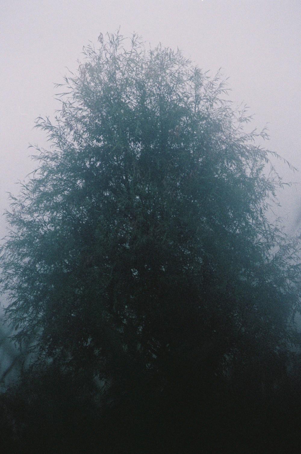 arbre brouillard