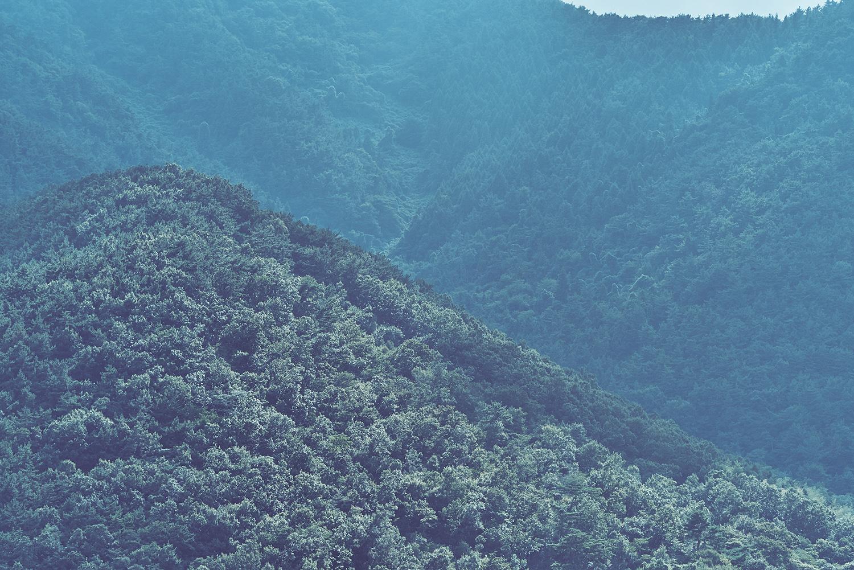 foret montagnes seoul